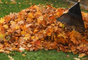 leaf clearance chelmsford