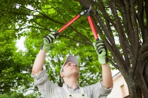 tree pruning chelmsford
