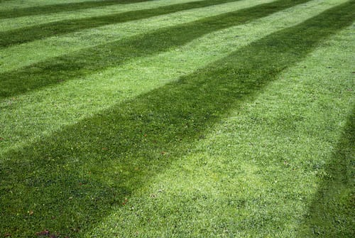 grass cutting chelmsford by lawn & order